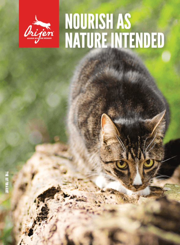 Brochure - Orijen Cat - Click to enlarge picture.